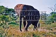 Elephant 0048