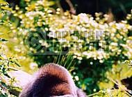 Gorilla 0011