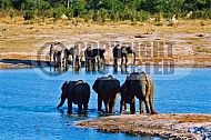 Elephant 0045
