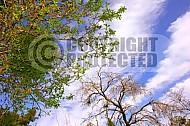 Foliage Israel 002