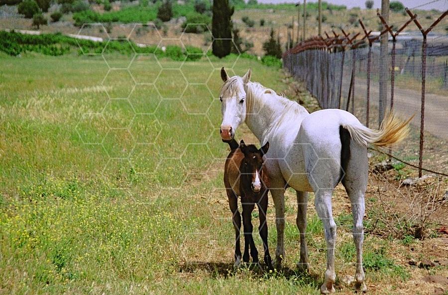 Horse 0009