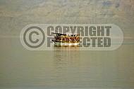 Dead Sea 011
