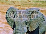 Elephant 0091
