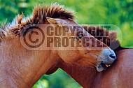 Horse 0011