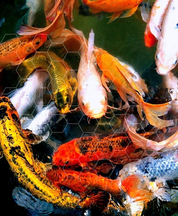 Fish 0007