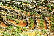 Judean Hills 008