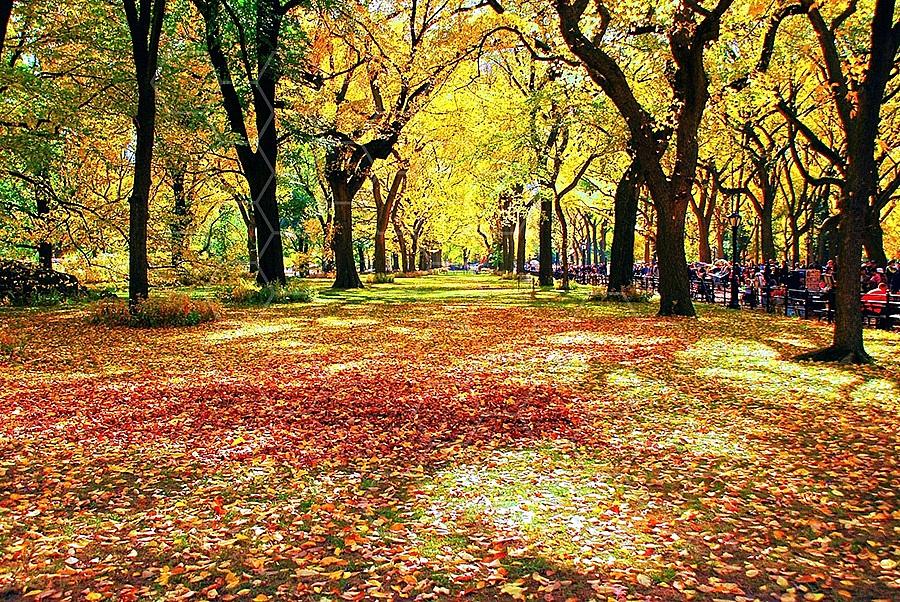 Foliage New York City Central Park 001