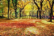 Foliage New York City Central Park 001