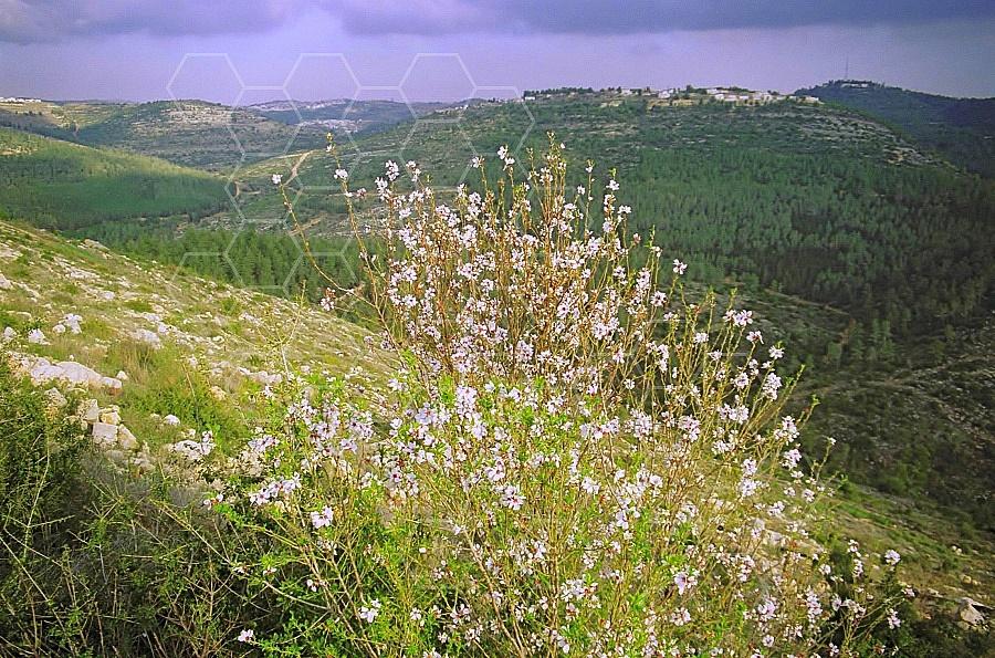 Judaean Hills 0012