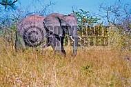 Elephant 0049