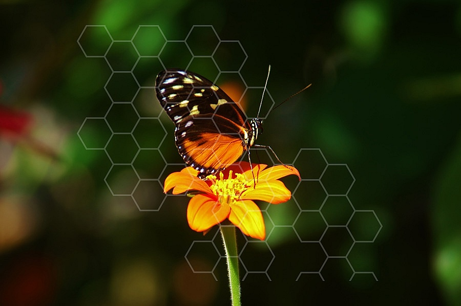 Butterfly 0022