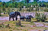Elephant 0017