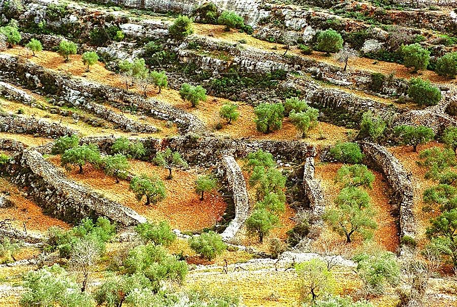 Judaean Hills 008