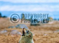 Seal Fish 0020