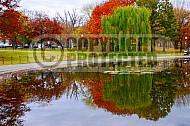 Foliage Washington Dc 012