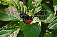Butterfly 0019