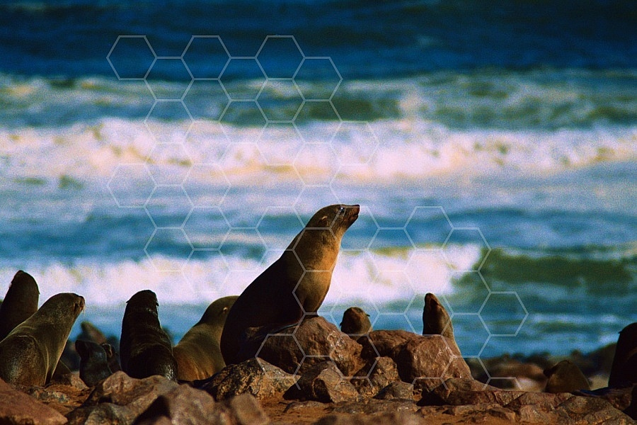 Seal Fish 0006