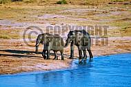 Elephant 0039