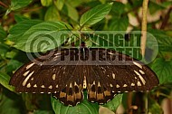 Butterfly 0001