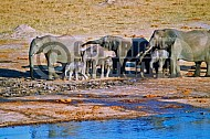 Elephant 0042