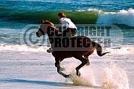 Horse 0017