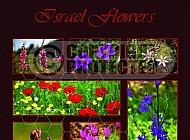 Israel Flora 006