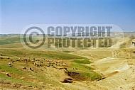 Judaean Desert 0048