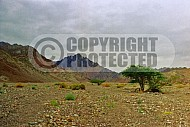 Mount Solomon 0011