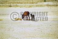 Donkey 0011
