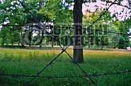 Westerbork Barbed Wire Fence 0003