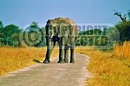 Elephant 0004