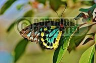 Butterfly 0031