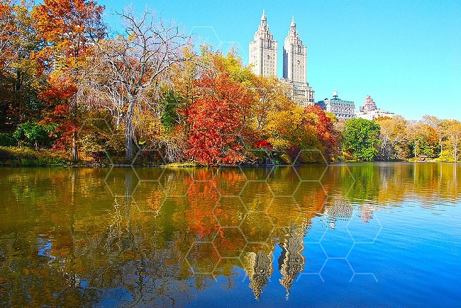 Foliage New York City Central Park 014