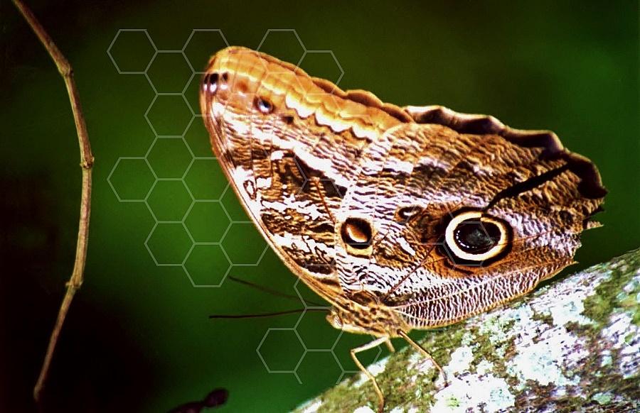 Butterfly 0043
