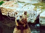 Bear 0004