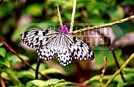 Butterfly 0051