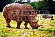 Rhinoceros 0002