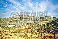 Judaean Hills 005