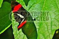 Butterfly 0038