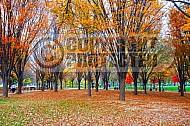Foliage Washington Dc 013