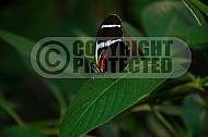 Butterfly 0032