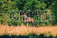Kudu 0002