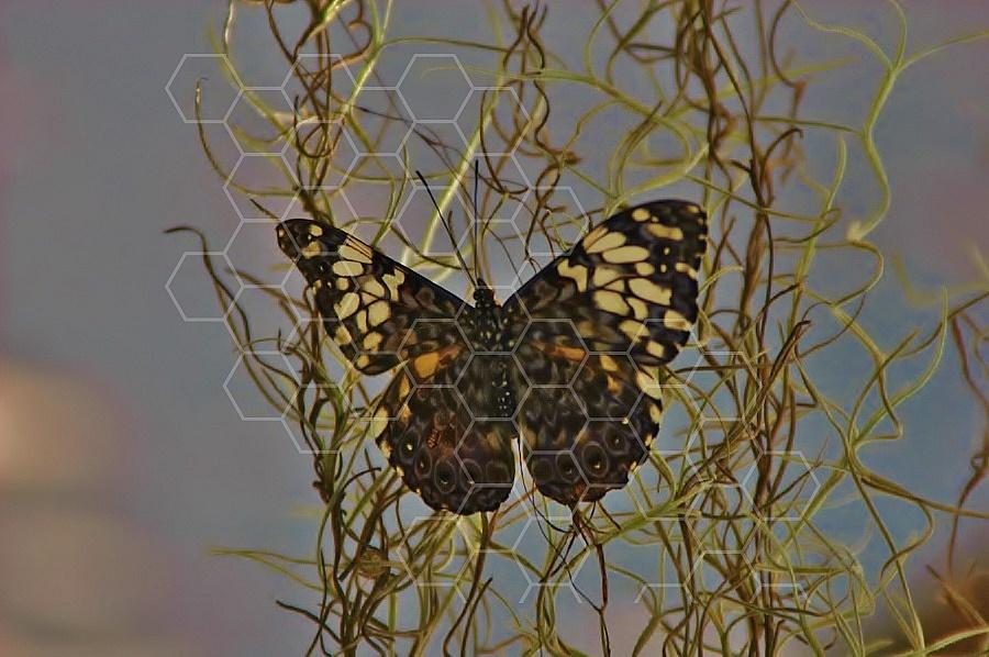Butterfly 0015