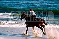 Horse 0016