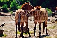 Horse 0001