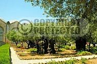 Jerusalem Gethsemani 008