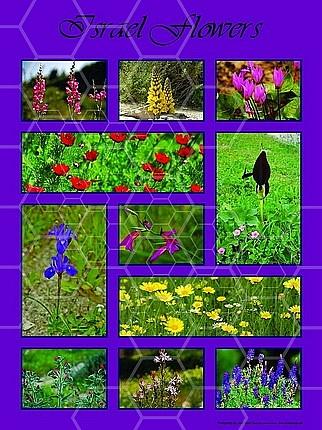 Israel Flora 008