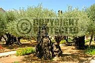 Jerusalem Gethsemani 015