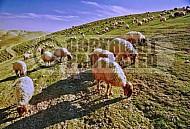 Judaean Desert 0003