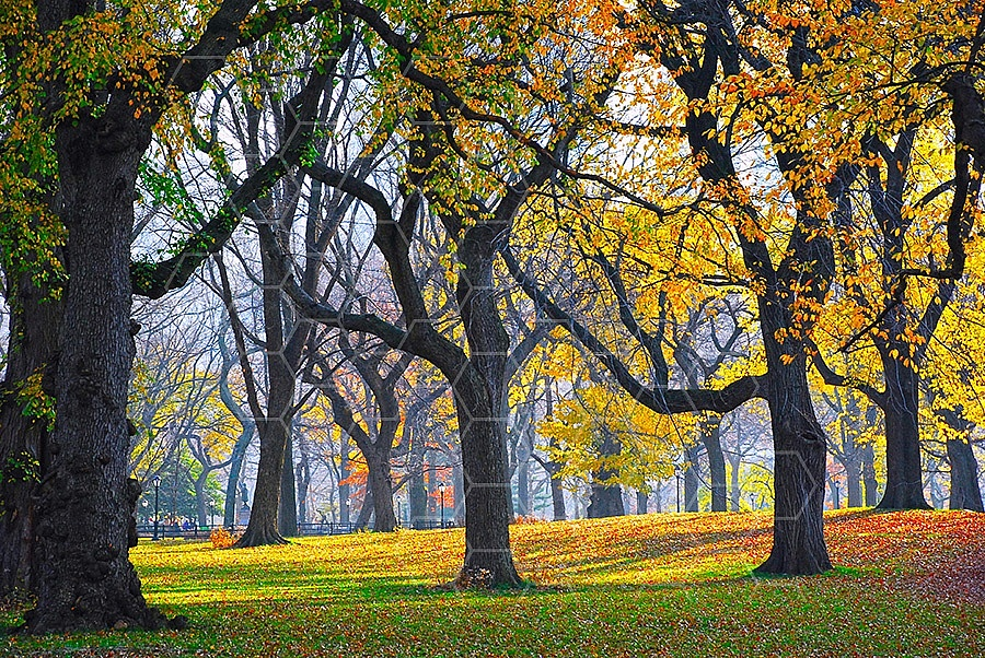 Foliage New York City Central Park 013